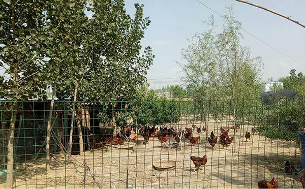 白银桦新石农业科技发展有限公司